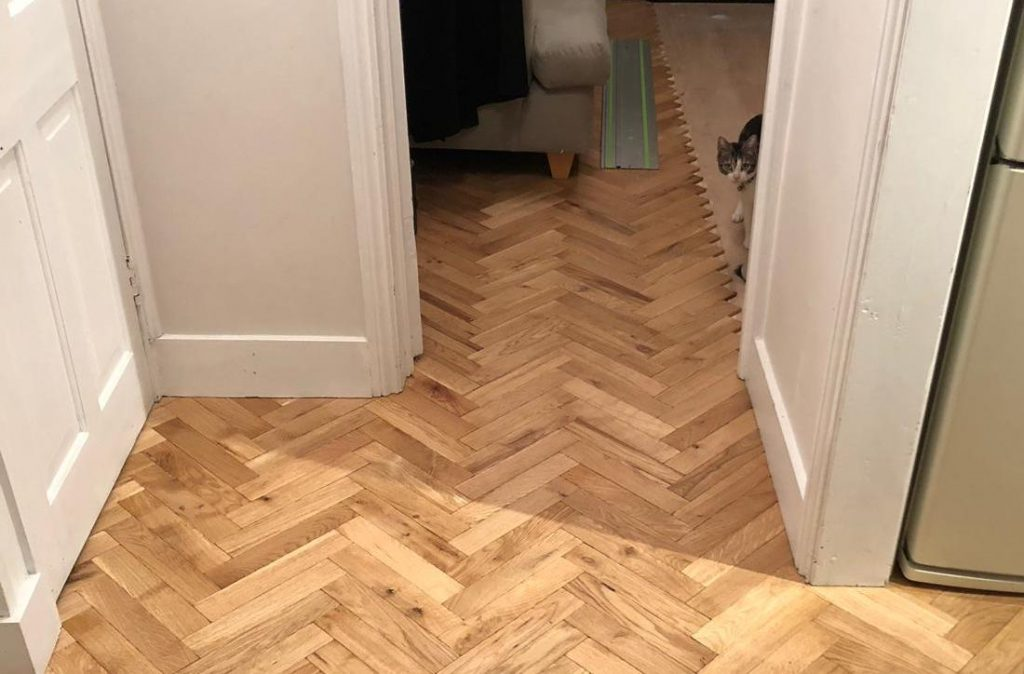 Newly laid parquet floor with cat