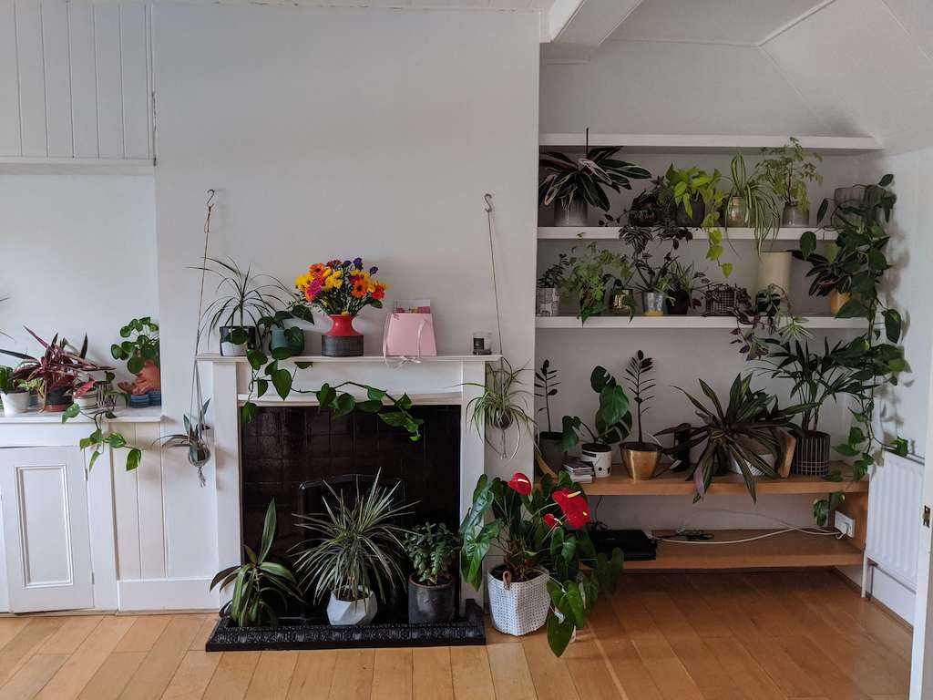 Fireplace with lots of house plants in front and on either side - in living room of house converted from shop in Brighton and Hove.