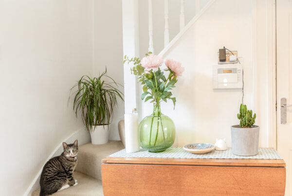 timber hallway table, indoor plants, and cat nearby. Renovation by Absolute Project Management.